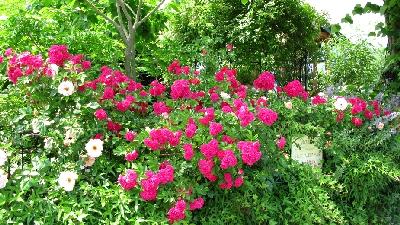 花結び「つるバラ」